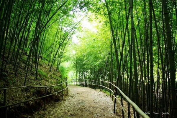 bamboo_park_korea_cobratex